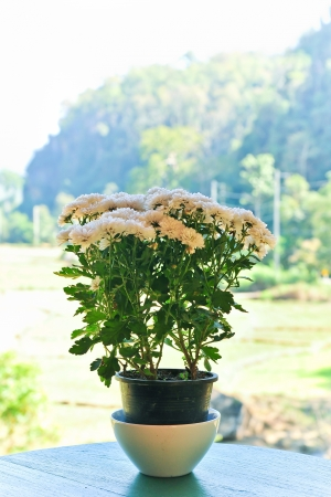 The beautiful white flower in Jardiniere on the table for decoration  photo