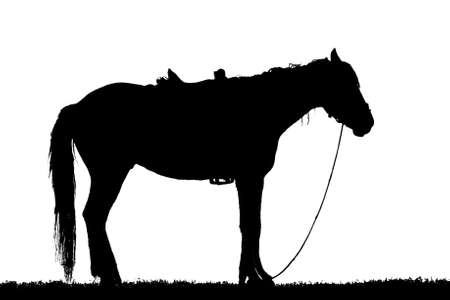 silhouette horse stands on grassy isolate on white background photo