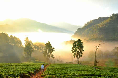View of Morning Mist at doi angkhang Mountain, Chiang Mai, Thailand Stock Photo