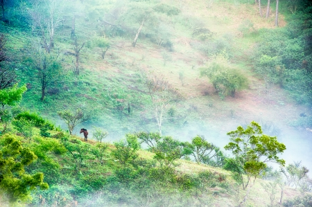 tree and horse in mist at Doi angkhang , Chiangmai, Thailand Stock Photo