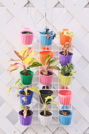 colorful flower pots photo