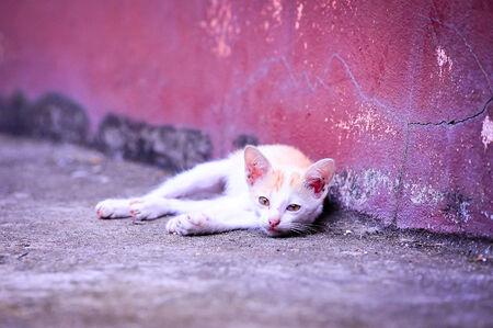 Cat in Thailand Stock Photo