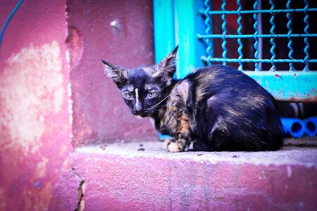 lain: thai cat kitten Stock Photo