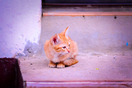 lain: Cat in Thailand Stock Photo