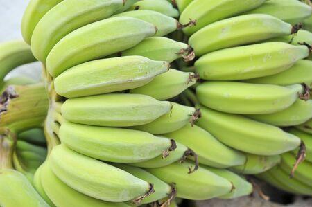 bunched: green banana