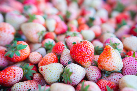 freshly harvested strawberries forming a background photo