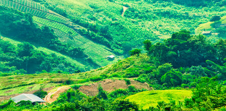 agriculture plantation on the mountain at Doi phartang, chiangrai, thailand photo