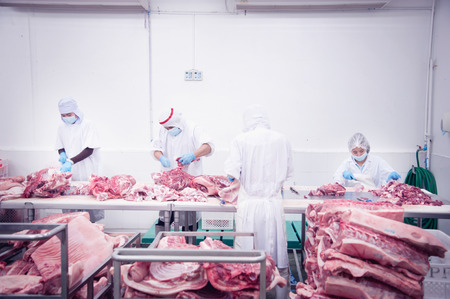 butcher that cuts fresh pork in meat industry photo