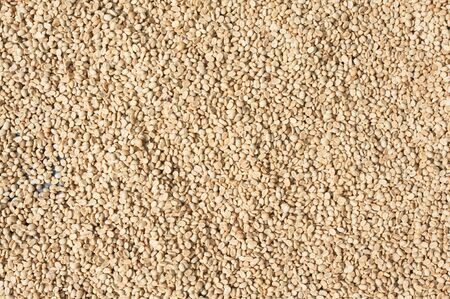 unroasted: Background texture of green un-roasted coffee beans.