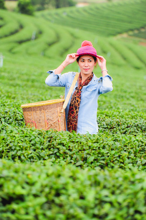 happyness: Asia beautiful Woman picking tea leaves in a tea plantation, happyness Stock Photo