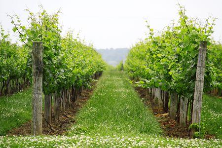 Winery in Niagara on the Lake 스톡 콘텐츠