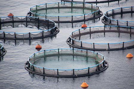 Aquaculture photo