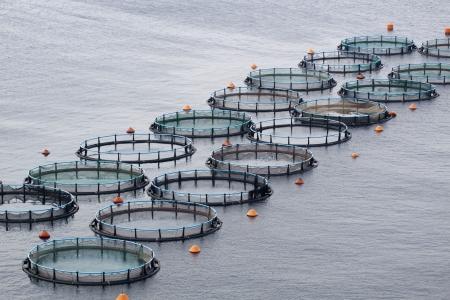 fischerei: Aquakultur Lizenzfreie Bilder