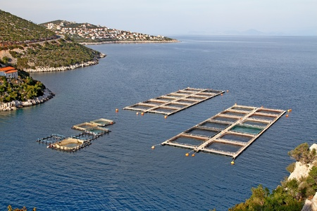 Fish farms in Peloponesse, Greece 에디토리얼