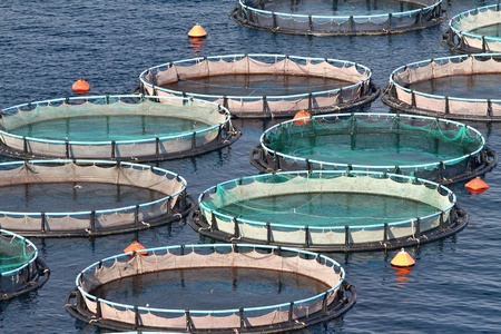 Fish farms in Peloponesse, Greece Stock Photo - 11458213