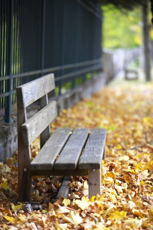 Lonely bench in a peacefull park