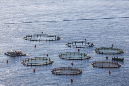 aquaculture: Aquaculture farms in northern Greece