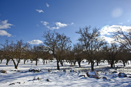 Snow trees in central Peloponesse, Greece