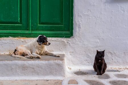 Cat and dog sitting together in front of an old traditional Mykonian house in Greece Фото со стока