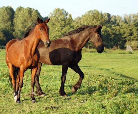 Horses together Stock Photo - 3625967