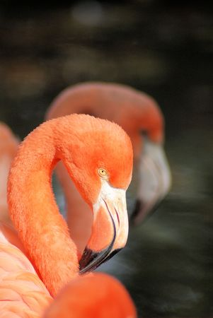 three flamingos side by side photo