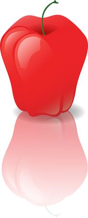 Apple on a shiny surface. Vector Illustration. Illustration