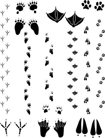 six objects: Paw prints and tracks of six different animals. Top Row Left to right: Black Bear, Seagull, Cat. Bottom Row: Crow, Beaver, Black Tailed Deer  Vectors are all clean objects easy to color or add background. All non-black areas are transparent in vector