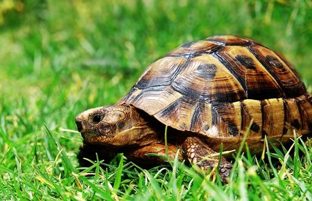 turtle on green grass photo