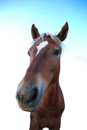 HEAD OF BROWN HORSE photo