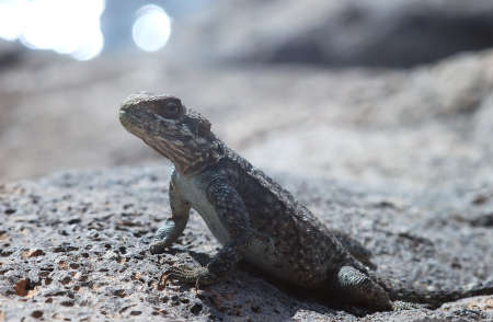 forest conservation: lizard Stock Photo