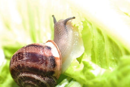 yuck: close up to snail on green background Stock Photo