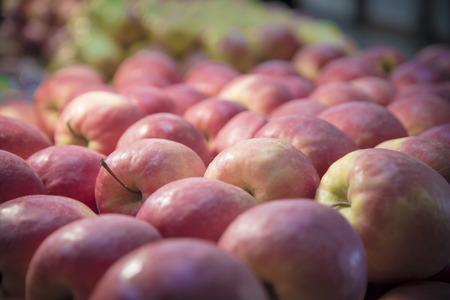 Red apples fresh garden fruit, shot in perspective 版權商用圖片