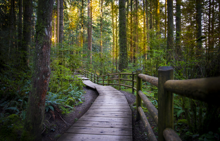 A shady enchanting scene found in the forest while hiking in Forest Park, British Colombia 版權商用圖片