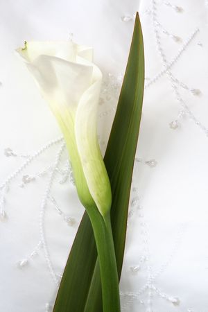 Calla Lily against Details of a Wedding Dress Stock Photo