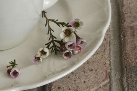 Flowers on Coffee Cup Saucer