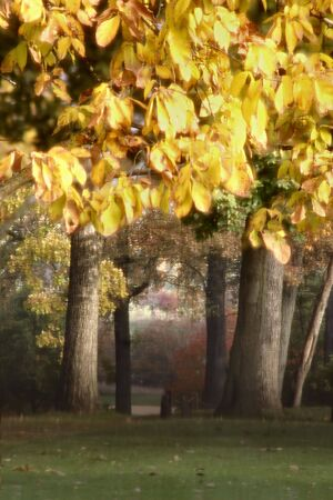 backwoods: Fall Woods