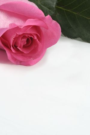 Rose Pink with Leaves as Top Border