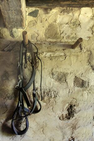 Horse harness hanging from barn wall