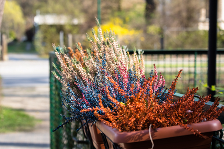 Colorful plants in a pot on a fence on the outskirts of Berlin Stock Photo