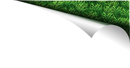 white paper page with fresh green grass in curl