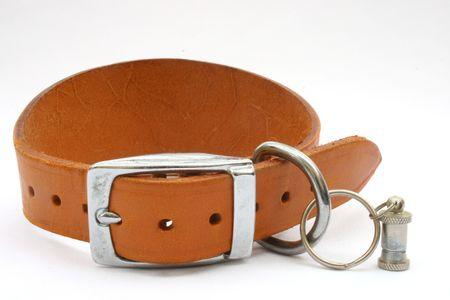 collarin: collar de perro de Greyhound  Foto de archivo