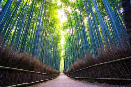 Pathway through Arashiyama Bamboo Forest Grove, Kyoto Prefecture, Japan - Great Background Concept for Motivating or Inspirational Quotes Reklamní fotografie