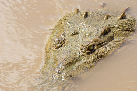 Crocodile Close Up on the Tarcoles River, Costa Rica. Seen on Boat Tour in Wild Stock Photo