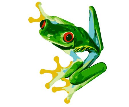 Red Eyed Tree Frog Illustration