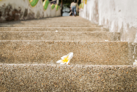 flower on stair photo