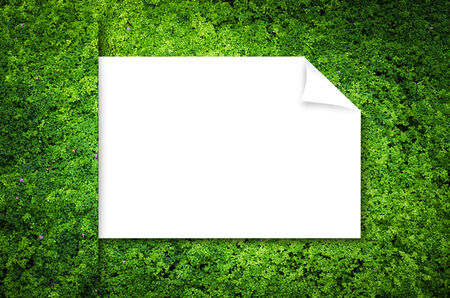 background  grass: Nature Green Background, grass cover eco