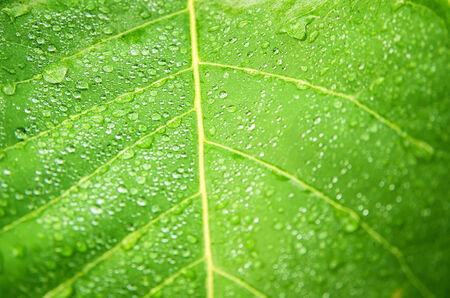 water drops on green leaf macro background. Stock Photo