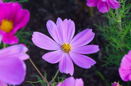 gro: Flower in the garden, violet nature flower