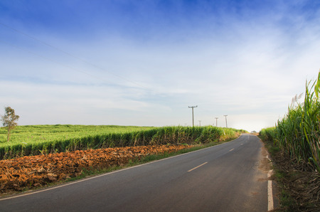 Road and Sugarcane field agriculture tropical farm landscape in thailand Stock Photo