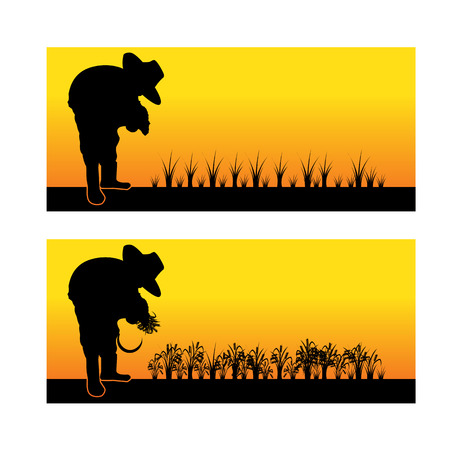 paddy: Silhouette of an asian woman planting rice seedlings and harvest in a paddy field vector illustration